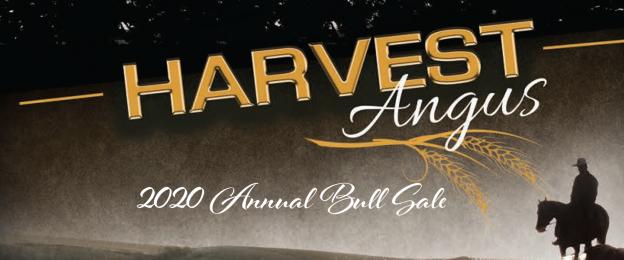 Harvest Angus 2020 Bull Sale