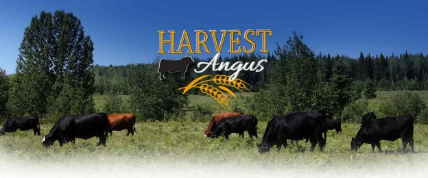 Harvest Angus Slider 3