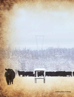 Harvest Angus Bull Sale Catalog 2015 Bk Cover