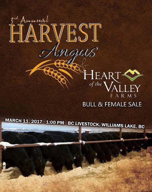 Harvest Angus BUll Sale 2017