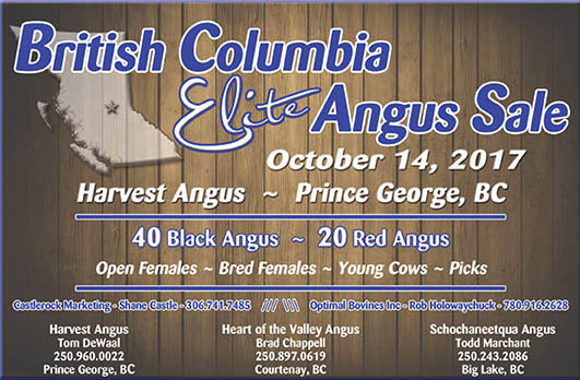 British Columbia Elite Angus Sale