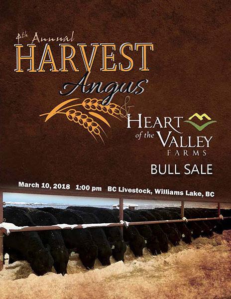 Harvest Angus 2018 Bull Sale