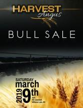 Harvest Angus 2019 Bull Sale