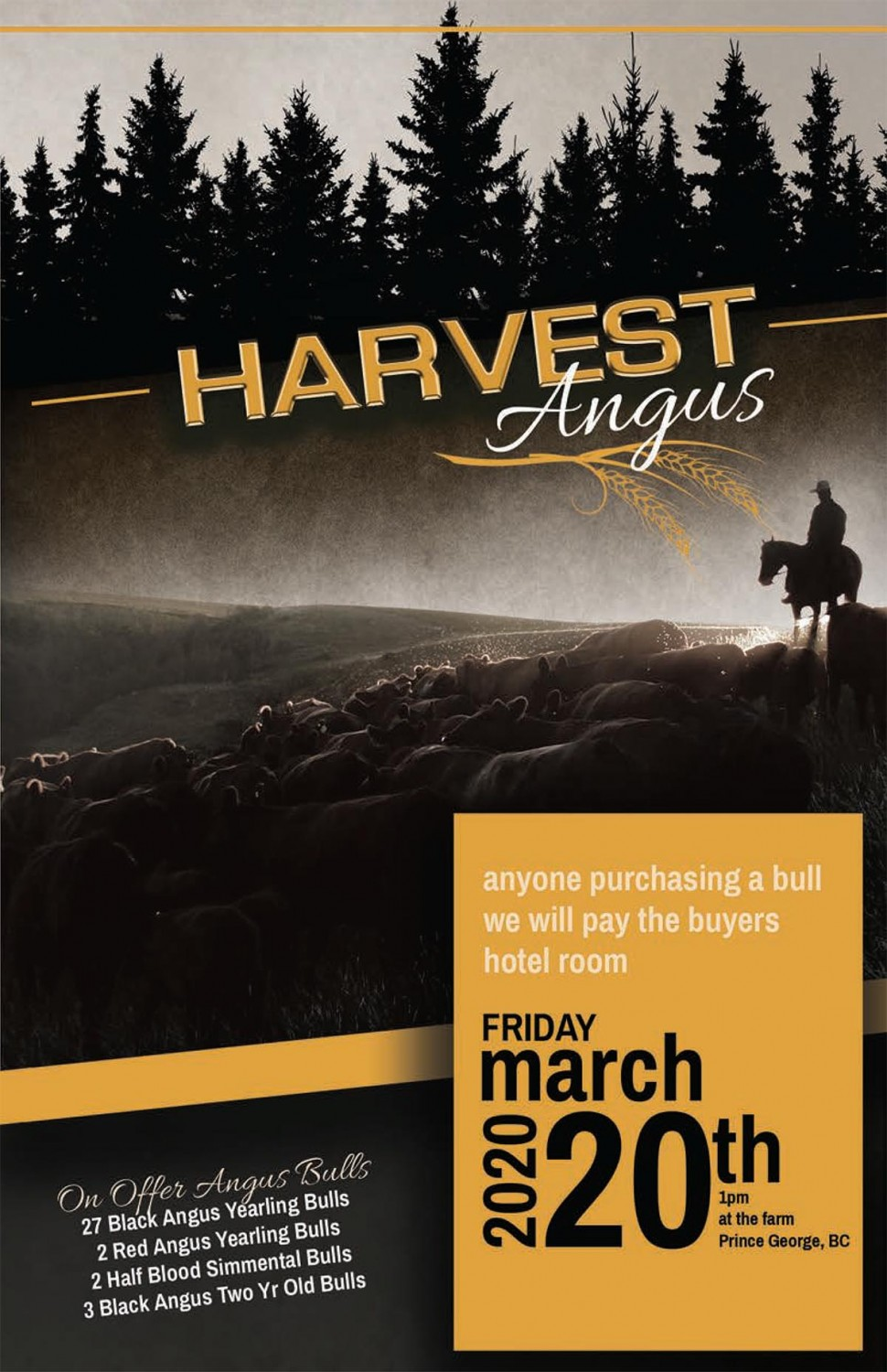 Harvest Angus 2020 Bull Sale Catalogue Cover