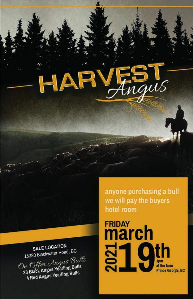 Harvest Angus Bull Sale 2021